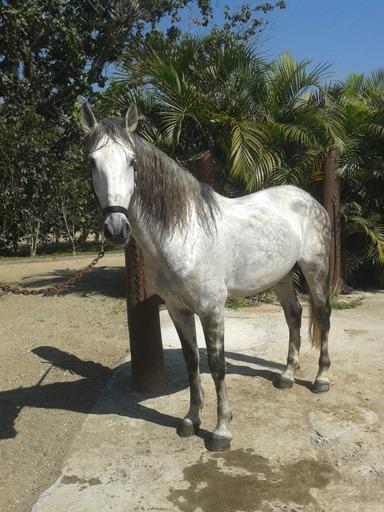 O que um cavalo pensa quando você está montando?