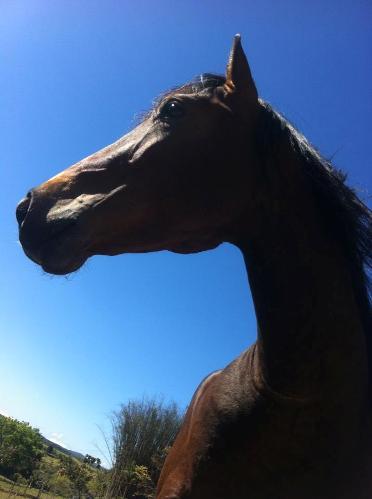 Egito, um cavalo difícil!?