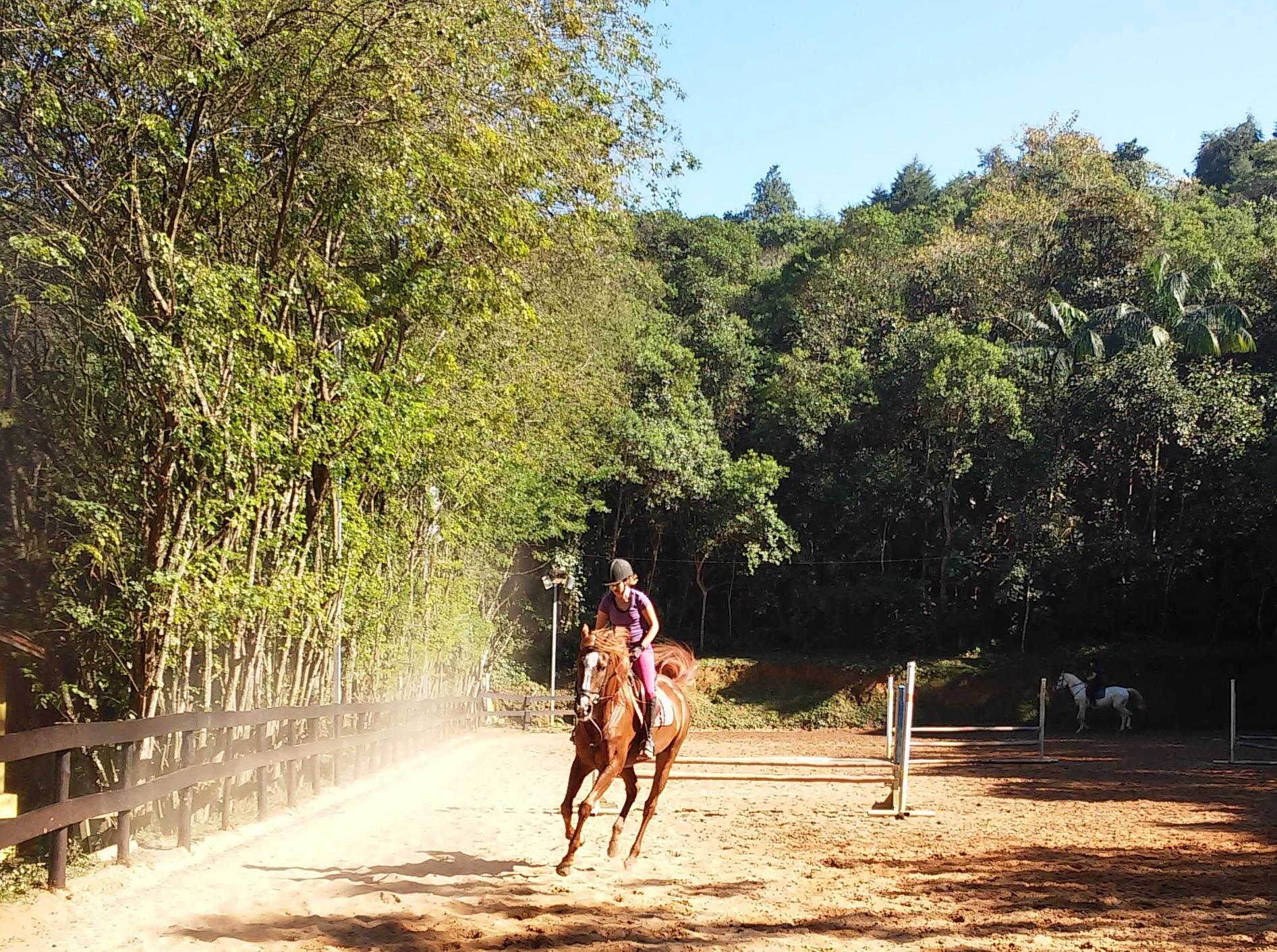 O que será que um cavalo sente quando o piso muda?