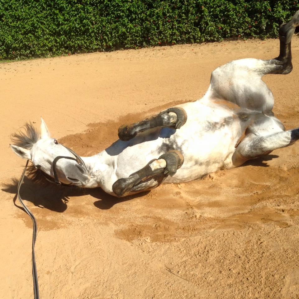 Como comprar um cavalo?