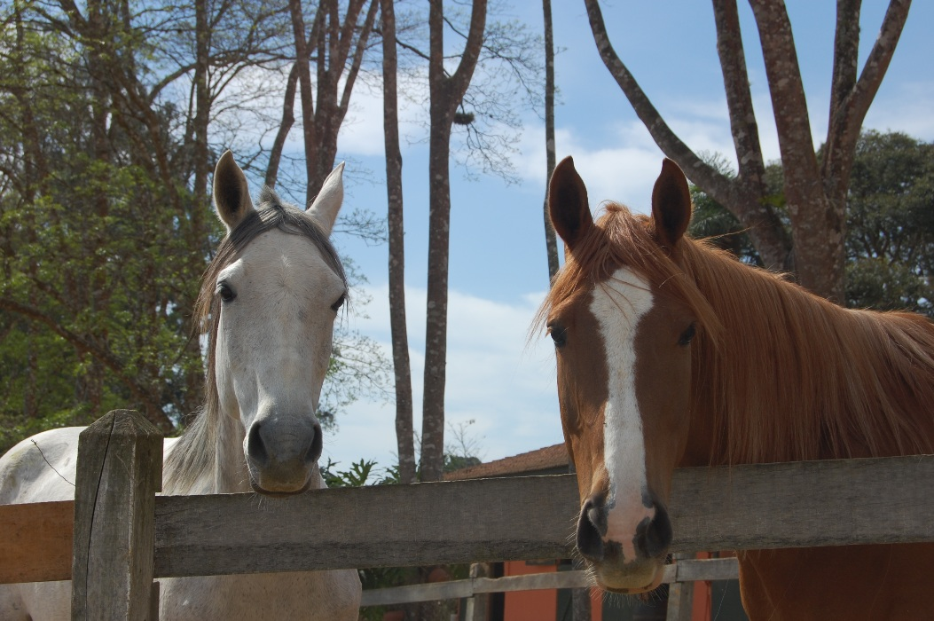 Como anda o preparo do seu cavalo?